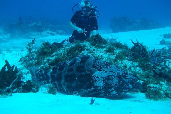 Plongée Sous-Marine LeGrand Cozumel: Pendant une plongée...