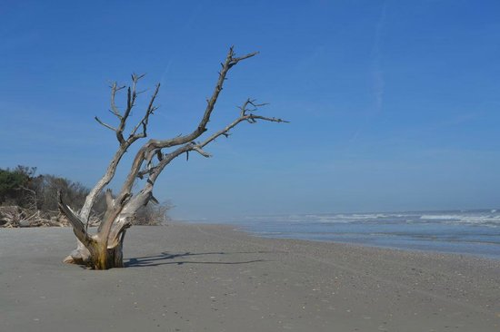 Little Talbot Island State Park: Beach Scene