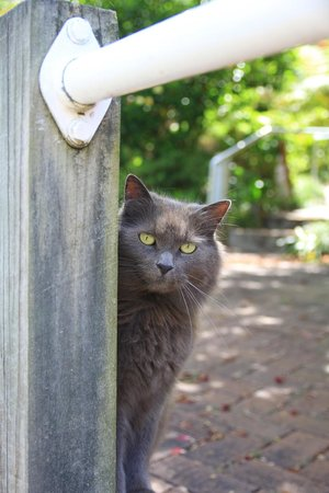 Nelson Bay Bed and Breakfast: Their cat