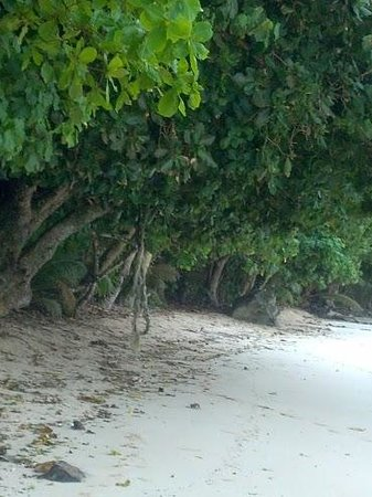 Tisa's Barefoot Bar: Tree swing on the beach