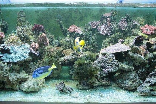 Carnas, France : Aperçu d'un aquarium