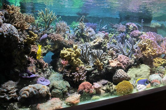 Carnas, France : Banc de corails