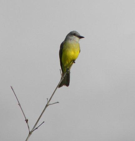 Hotel Buena Vista: Bird on property
