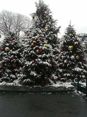 New York Botanical Garden : Cold but pretty