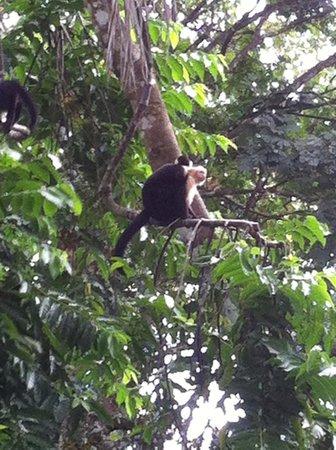 Byblos Resort & Casino : Monkeys