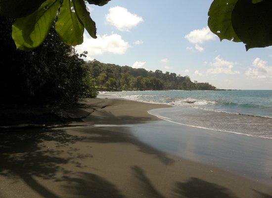 Casa Corcovado Jungle Lodge : Private beach