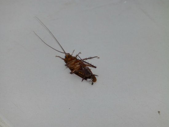 Reef View Hotel: Dead cockroach in bathroom
