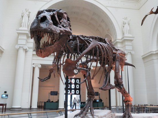The Field Museum : Sue.