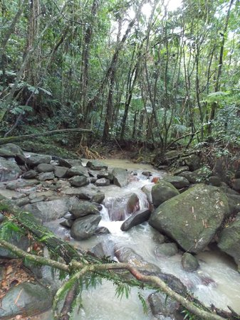El Yunque Tours: 2nd stage stream