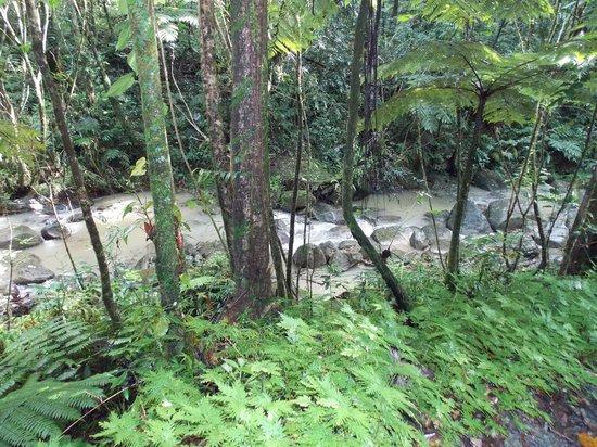 El Yunque Tours: beautiful