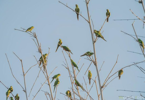 Poco Preto trail: Parrots roosting on Parrot Island