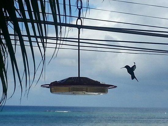 Por Qué No?: colibris eating with us :-)
