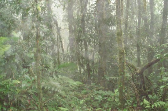 Hotel Lomas del Volcan: Along the resorts rain forest trail