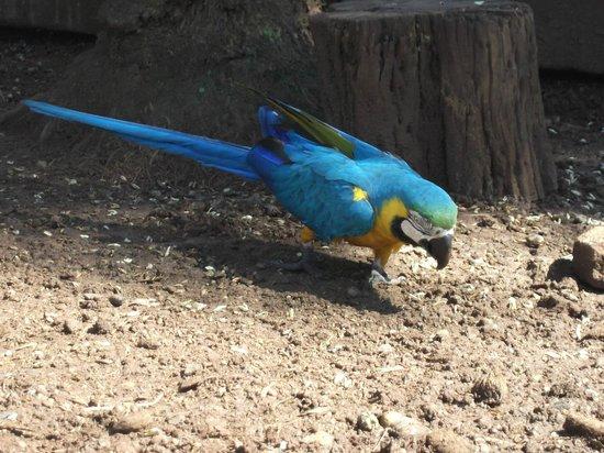 Silvestre Park Hotel Eco Resort : arara azul