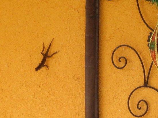 The Inn at Twin Palms: Bug-catching lizard