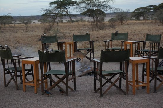 Ndutu Safari Lodge: Right outside the lounge