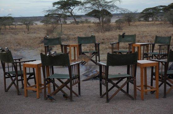 Ndutu Safari Lodge : Right outside the lounge