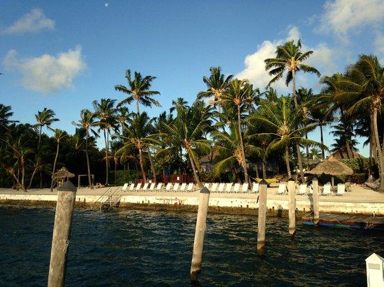 Amara Cay Resort : Hotel behind the palms