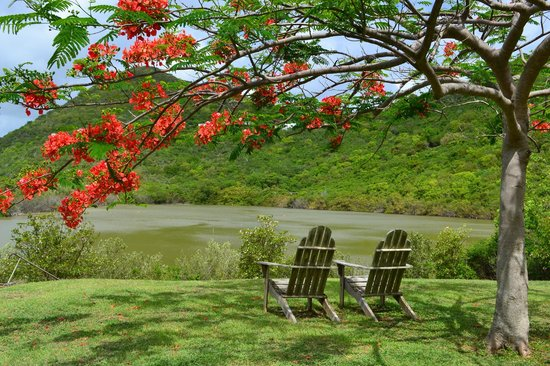Guana Island : Relaxing time watching flamingos