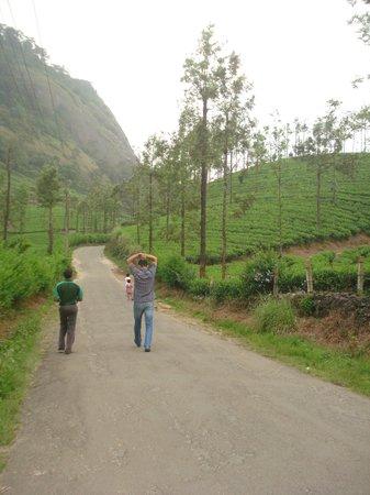Wild Elephant Eco Friendly Resort: walk through tea gardens
