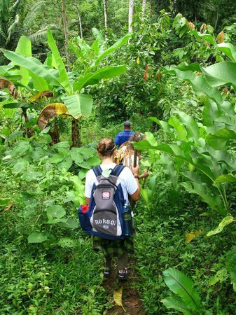 Oreba Chocolate Tour : Hiking around the plantation