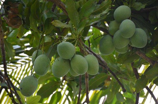 Aneka Lovina Beach Hotel: Mango