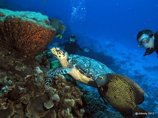 Blue XT Sea Diving: Friendly Turtle