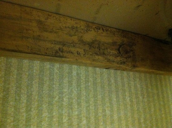 Hotel M, Mount Pocono: mold on wood under sink #2
