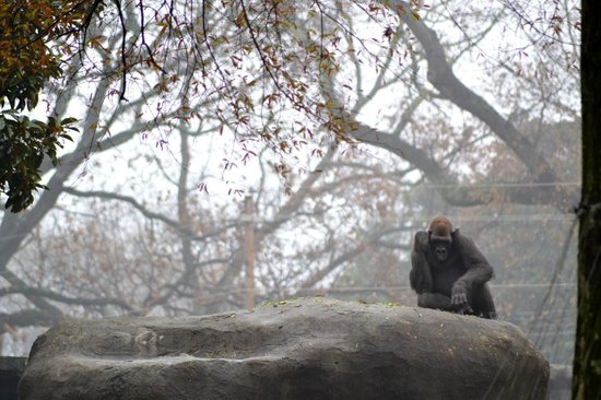 Zoo Atlanta: Guard duty