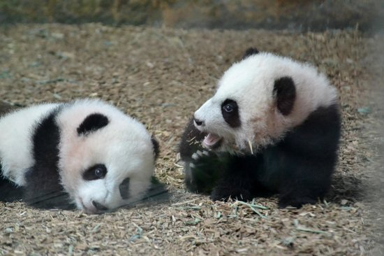 Zoo Atlanta: The twins
