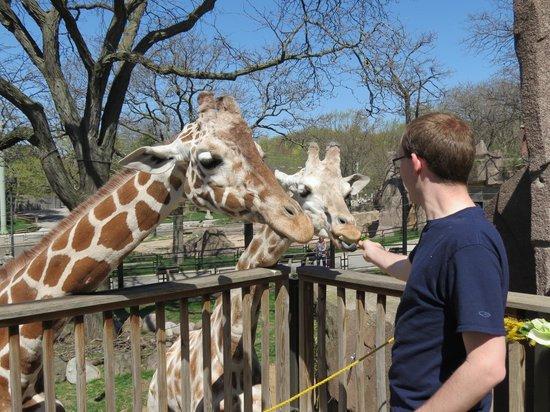 Milwaukee County Zoo: Giraffe Feeding.