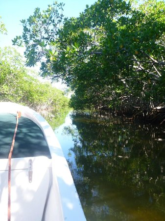 Sin Duda Villas : Kayaking through the mangroves