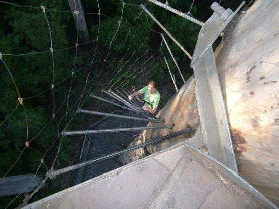 Dave Evans Bicentennial Tree: Rungs and chicken wire