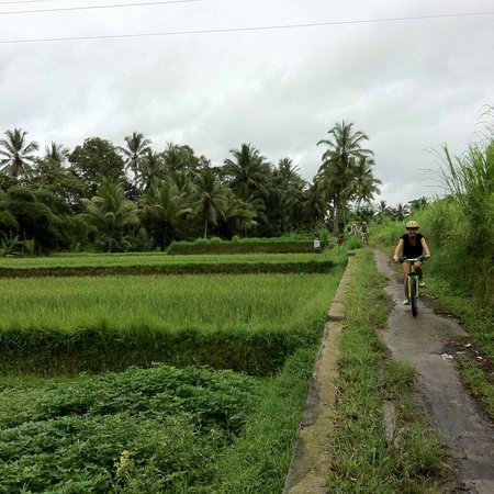 Alila Ubud: Fietsen in rijstveld