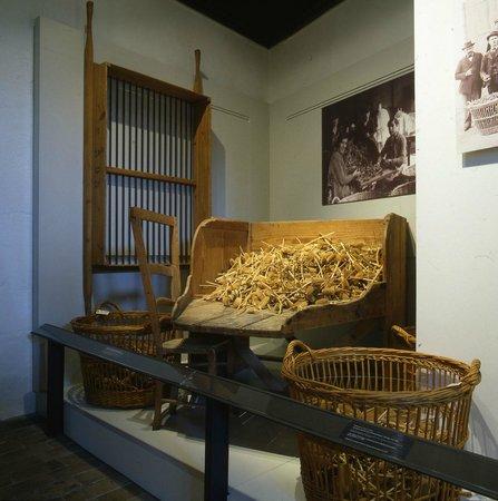 Musee des alpilles : Espace chardons cardères