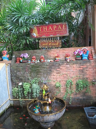 Thapae Boutique House: Little pond where the insects come from!!