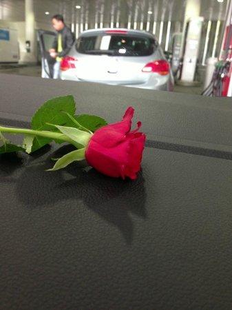 Роза, подаренная в Golden Leaf Hotel & Residence Frankfurt