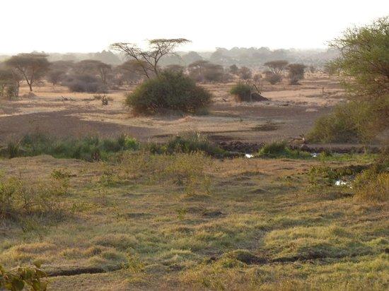 Ndarakwai Ranch Camp: View