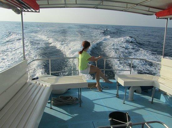 Holiday Island Resort & Spa: возвращаемся из плавания к дельфинам