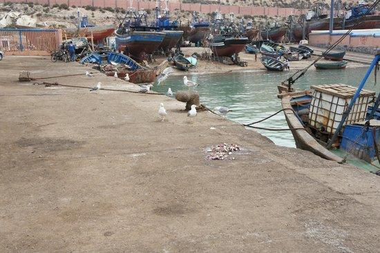 Agadir Fishing Port : Порт