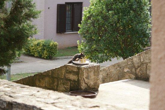 Naturist Solaris Residence: Blick von der Terasse