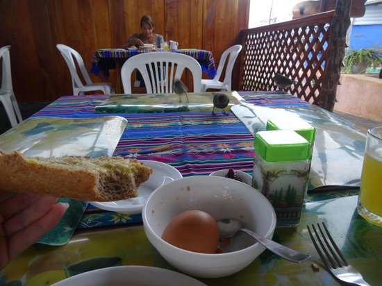 La Peregrina: Breakfast with the birds...