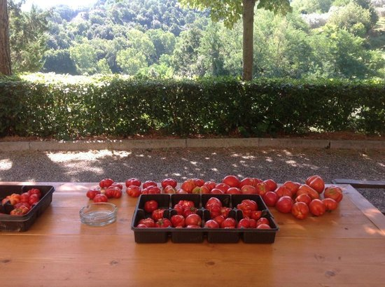 Il Portone: Tomatoes harvested each morning in August.