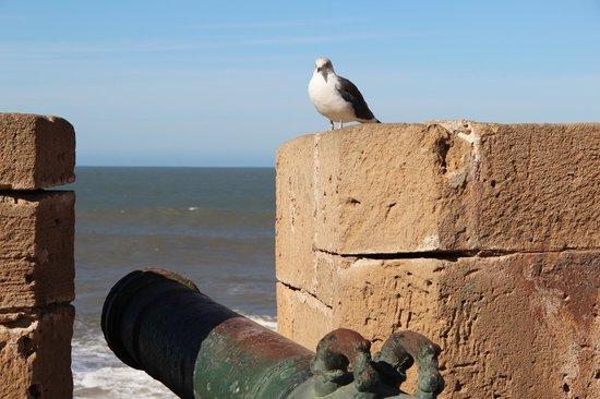 Essaouira Beach : Essaouira