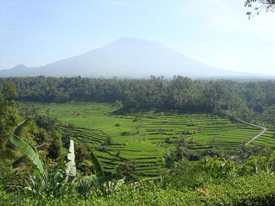 Mahagiri Panoramic Resort & Restaurant : vue du volcan Batur et des rizières de la terrasse du restaurant