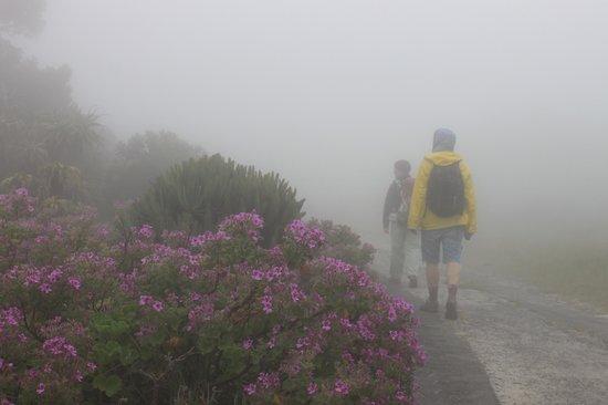 Ridgway Ramblers: walking through the mist filled trails