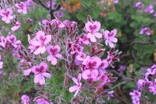 Ridgway Ramblers: Flowers that line the trail