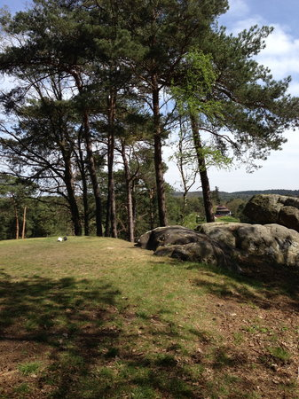 Hotel de Londres: Forêt de Fontainebleau
