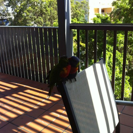 Mantra French Quarter Resort: Birds in the morning on the balcony.
