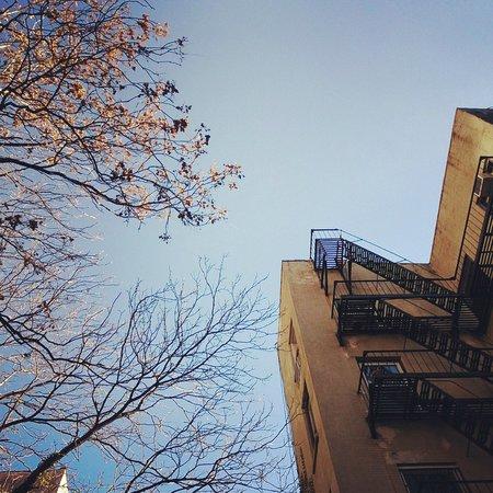 Chelsea Pines Inn: Garden2